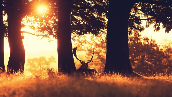Animals deer evening horns landscapes wallpaper