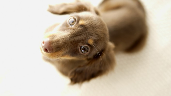 Animals dogs eyes funny puppies wallpaper