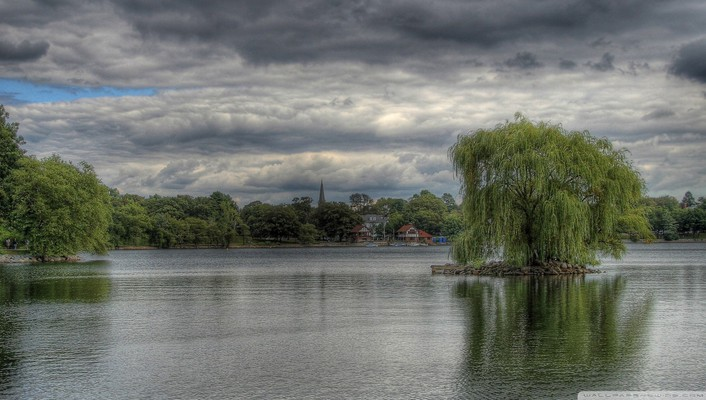 Weeping willow hdr wallpaper
