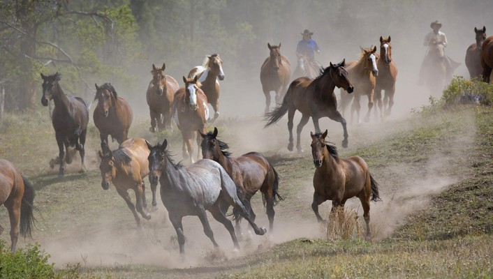 Hungary animals horses running wallpaper