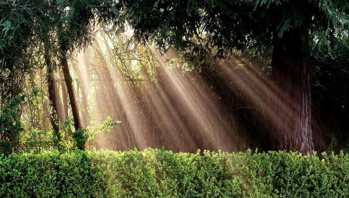Light landscapes nature sun bushes protection inspiration wallpaper