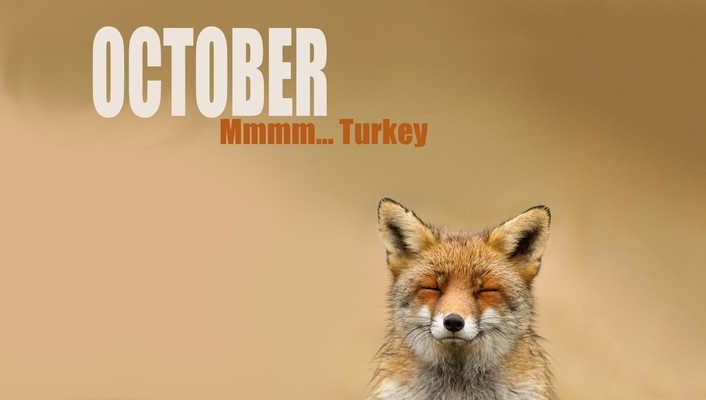 October foxes wallpaper