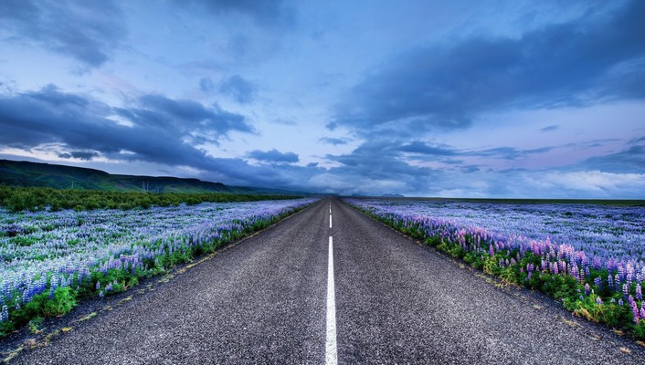 Iceland blue flowers horizon landscapes wallpaper