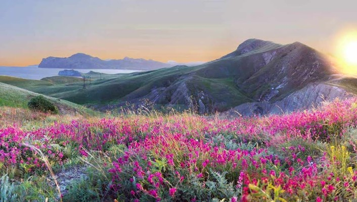 Landscapes nature flowers yellow pink grass hills wallpaper