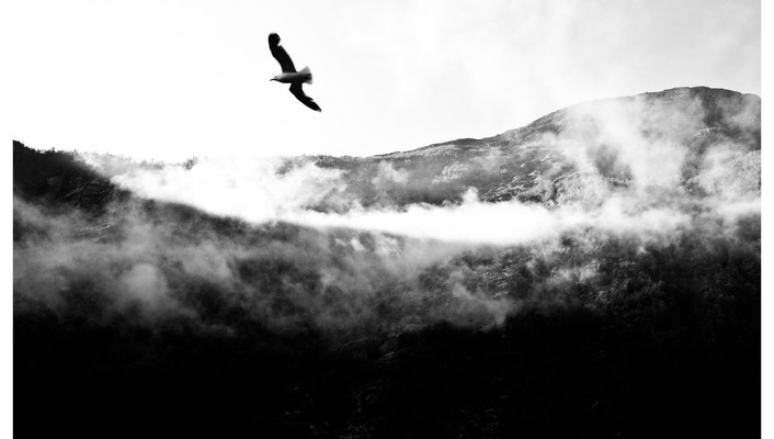 Eagles grayscale landscapes wallpaper