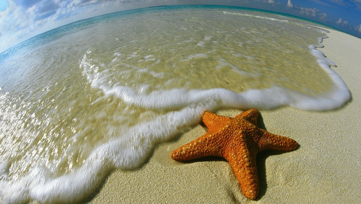 Animals shore maldives starfish wallpaper