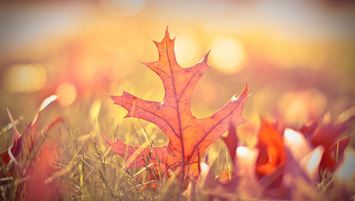 Nature autumn (season) leaves macro wallpaper