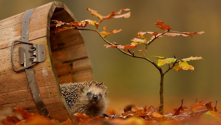 Animals autumn wildlife wallpaper