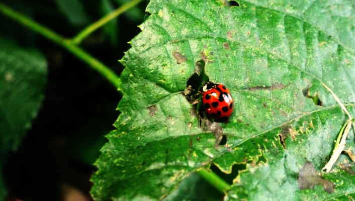 Nature plants ladybirds eating wallpaper