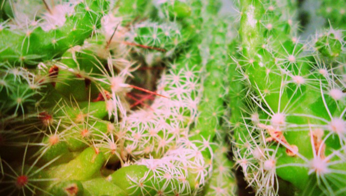 Plants cactus wallpaper