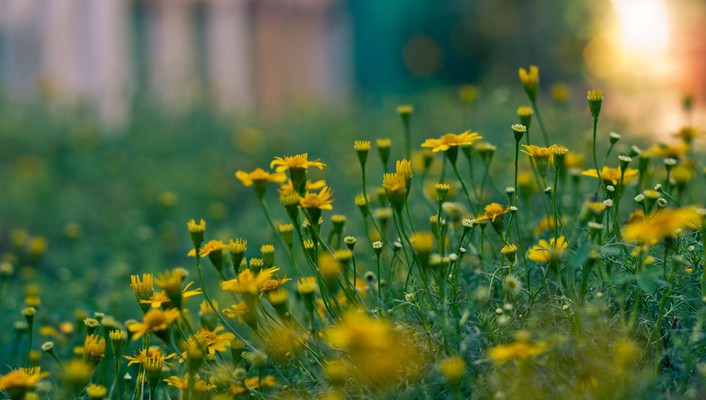 Depth of field flowers nature yellow wallpaper