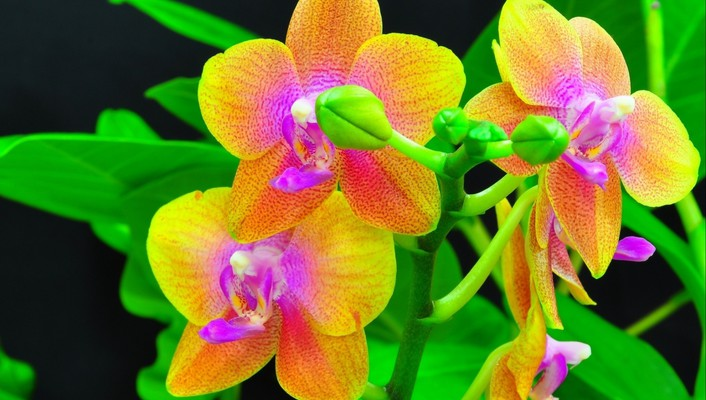 Beauty orchids wallpaper