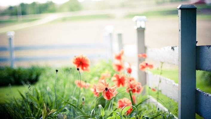 Nature fences depth of field red flowers wallpaper