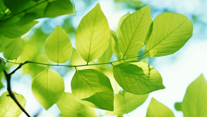 Natural green leaves wallpaper