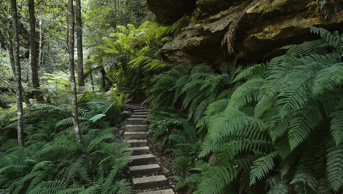 Nature australia national park new south wales wallpaper