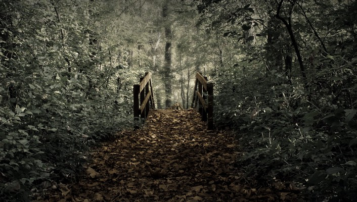 Bridges fallen leaves forests landscapes wallpaper