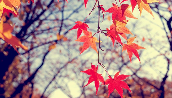 Autumn leaves nature trees wallpaper