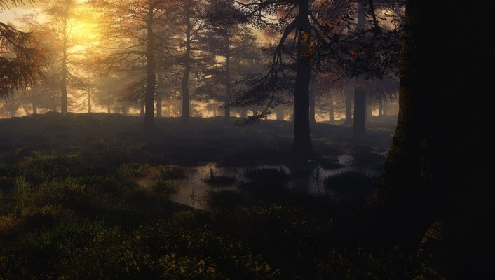 Sunset forest swamps shades wallpaper