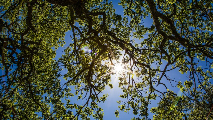 Hdr photography sun branches nature trees wallpaper