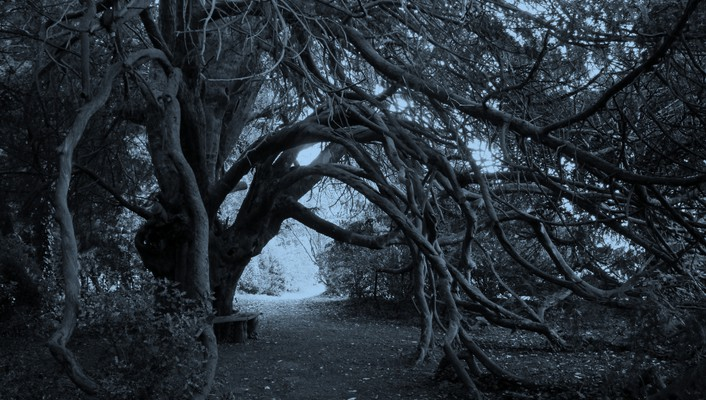 Trees forest monochrome branches wallpaper