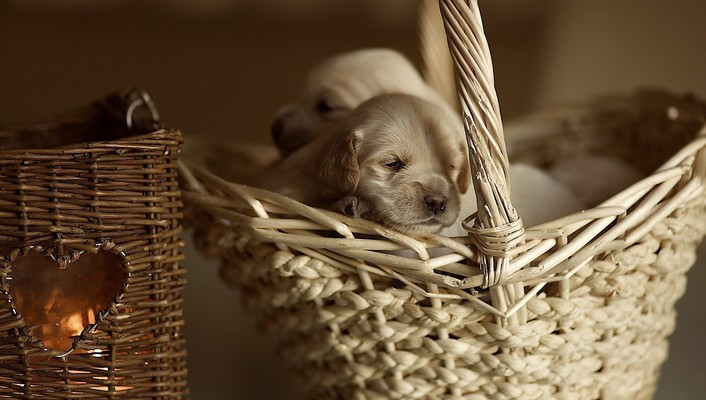 Animals baskets dogs wallpaper