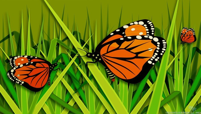 Butterfly on grass wallpaper