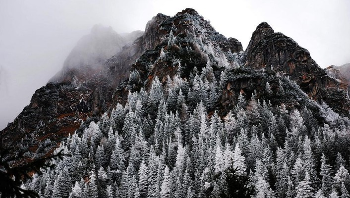 Mountains landscapes snow trees fog evergreens wallpaper