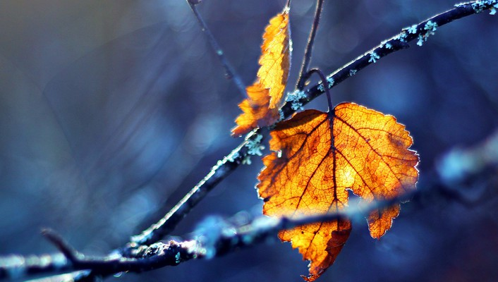 Close-up leaves autumn wallpaper