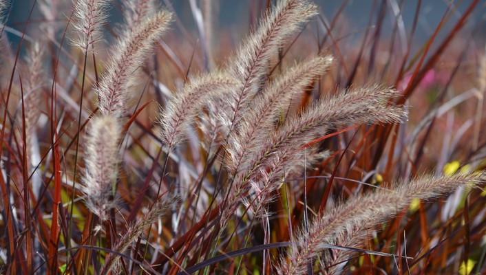 Wild field grass wallpaper