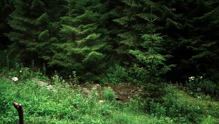 Grass romania lonely streams relaxing pine trees wallpaper