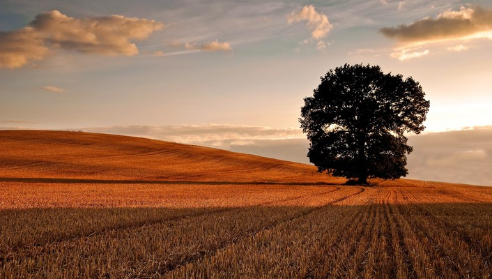 Nature trees autumn (season) fields wallpaper