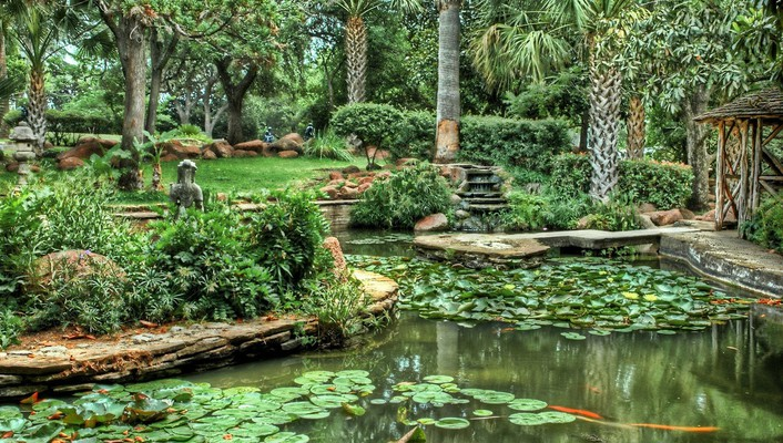 Exotic pond garden wallpaper