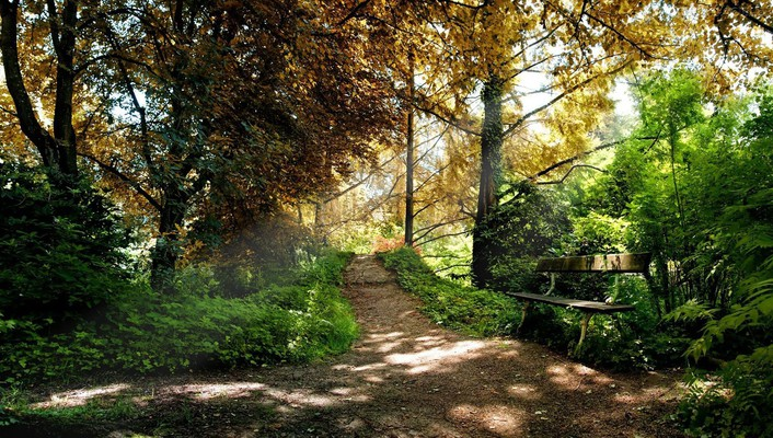 Bench on a path in the woods wallpaper