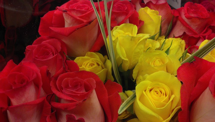 Red yellow roses wallpaper