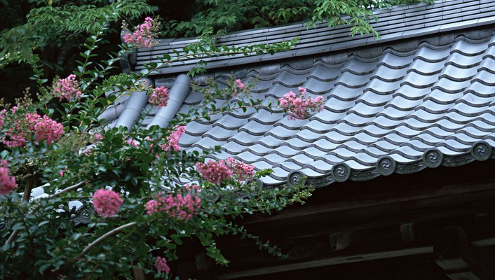 Japan flowers spring (season) asian architecture roofs wallpaper