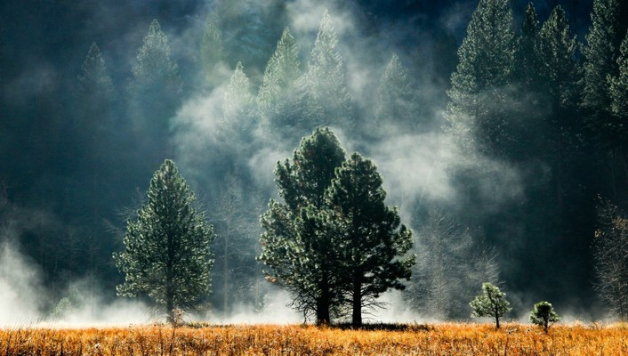 Landscapes nature grass fog colors wallpaper