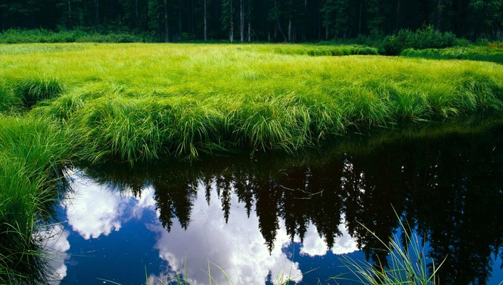 Clouds forests grass green landscapes wallpaper