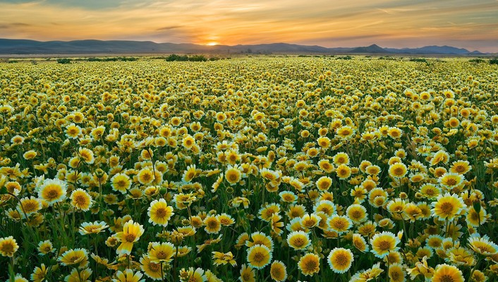 California monument plain wildflowers wallpaper