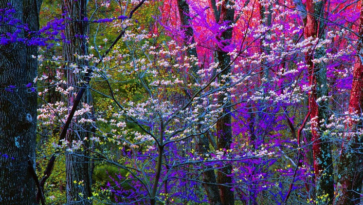 Blooming forest wallpaper