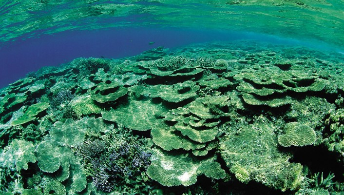 Green underwater coral reef wallpaper
