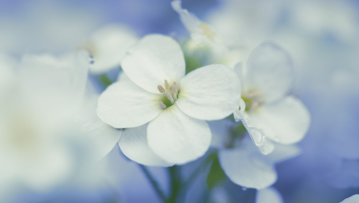 Nature flowers macro white wallpaper