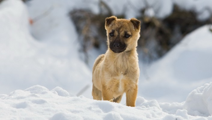 Documentary animals dogs pets snow wallpaper