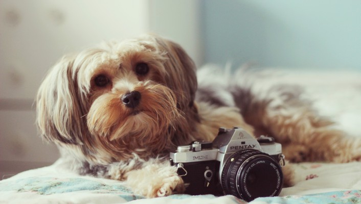 Animals dogs cameras wallpaper