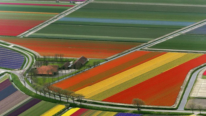 Landscapes multicolor fields holland the netherlands wallpaper