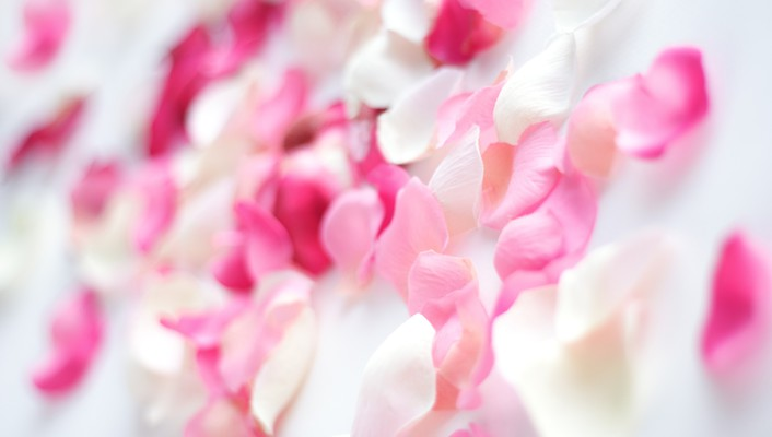 Pink flower petals wallpaper