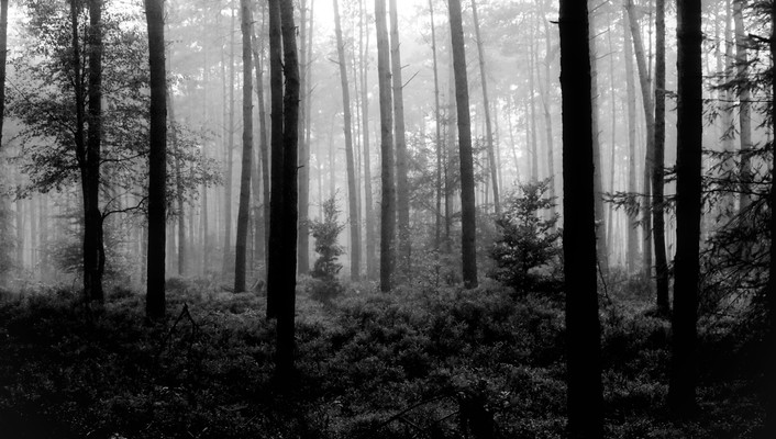 Trees forest national geographic monochrome wallpaper
