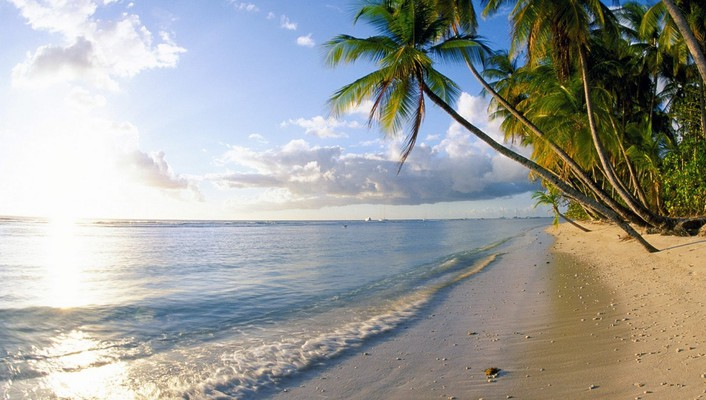 Caribbean tobago beaches palm trees pigeons wallpaper