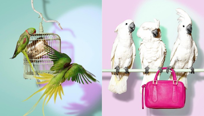 Parrots purses birds wallpaper