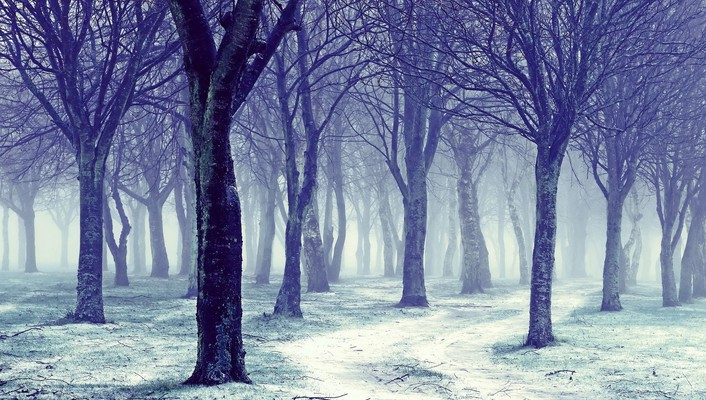 Forests landscapes nature snow trees wallpaper