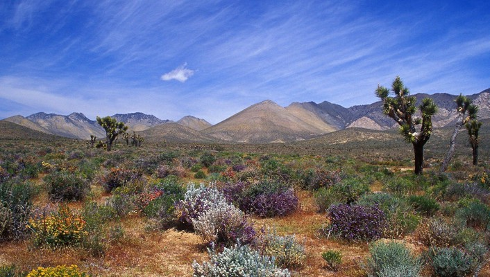 California bloom deserts mountains skyscapes wallpaper